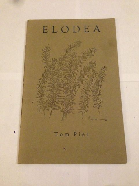 Image for Elodea by Pier, Tom