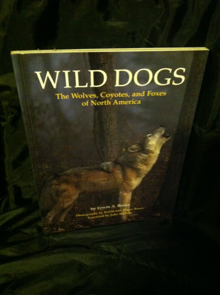 Image for Wild Dogs: The Wolves, Coyotes, and Foxes of North America